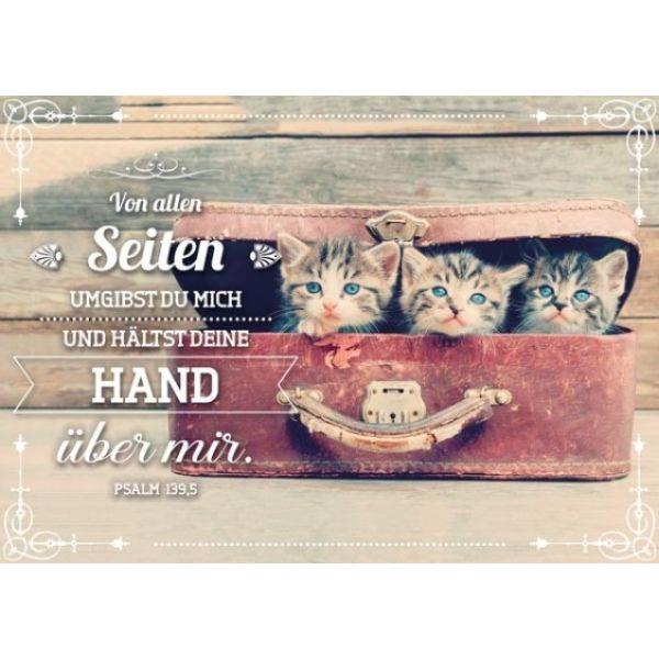 Postkartenserie Kätzchen im Koffer - 12 Stück
