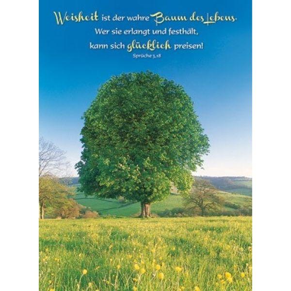 Postkarten: Weisheit ist der wahre Baum des Lebens, 4 Stück