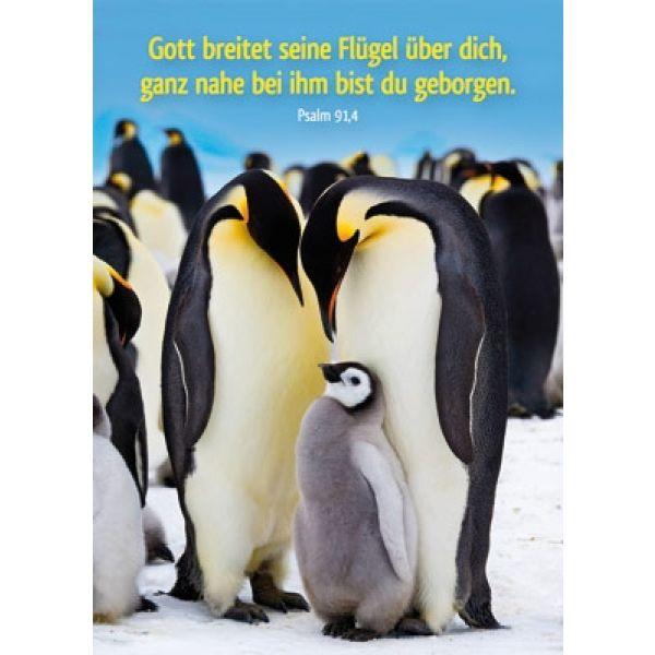 Postkarten: Gott breitet seine Flügel, 12 Stück