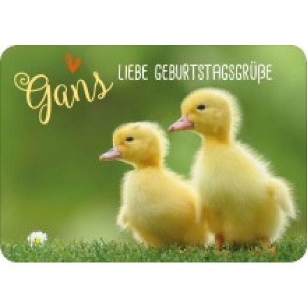 Postkarte - Gans liebe Geburtstagsgrüße