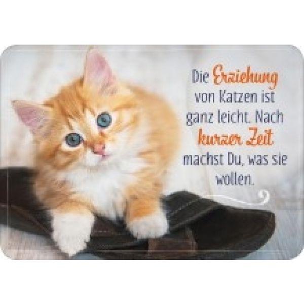 Postkarte - Die Erziehung von Katzen