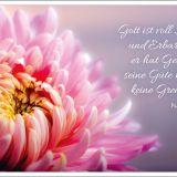Postkartenset: Gott ist verlässlich und gnädig