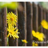 """Postkartenbuch """"Herzensmensch"""""""
